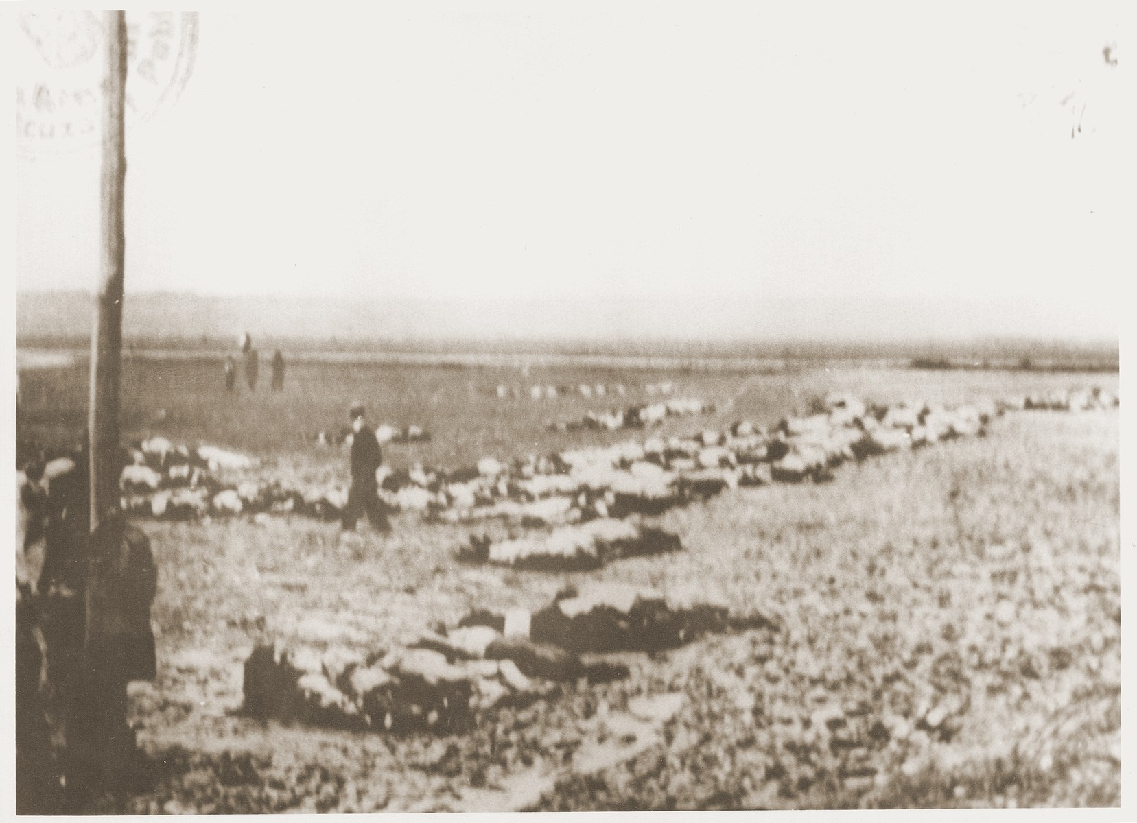 The bodies of Jews removed from the Iasi death train during a stop on the journey, are laid out in rows beside the tracks.