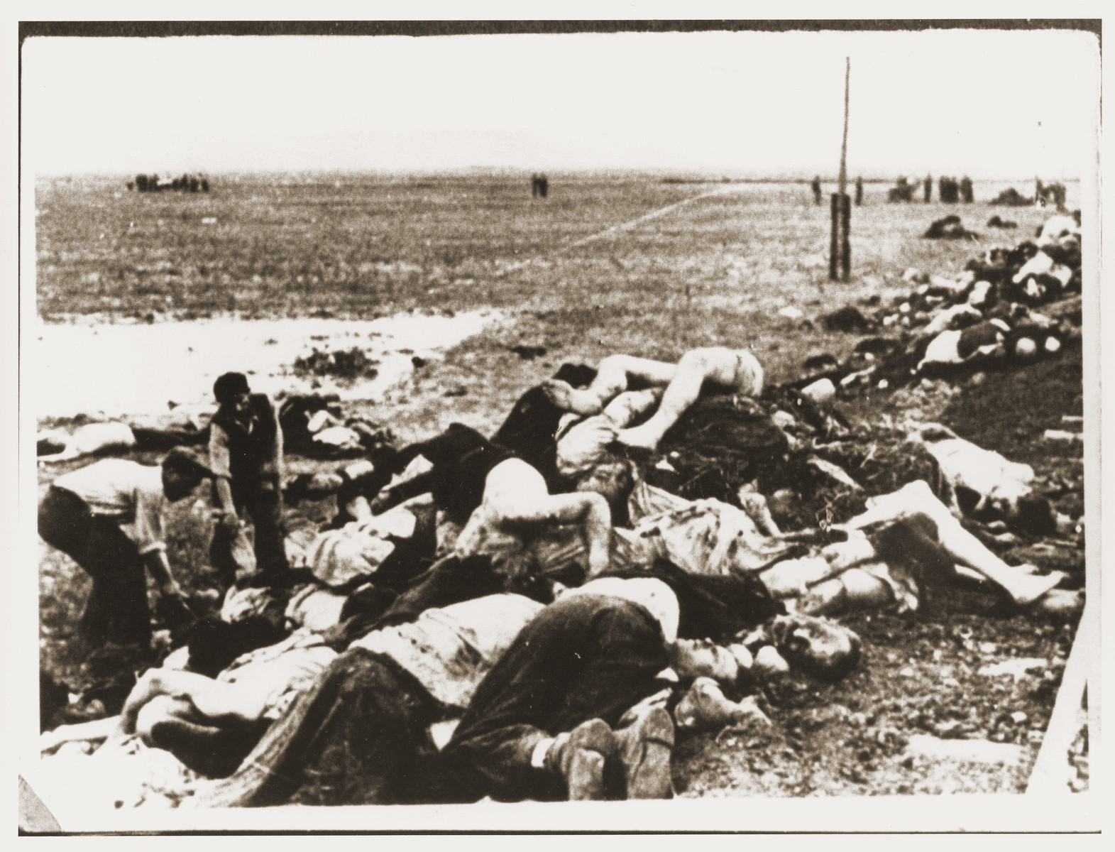 Civilians begin to lay out for burial the bodies of Jews removed from the Iasi death train during a stop on the journey.