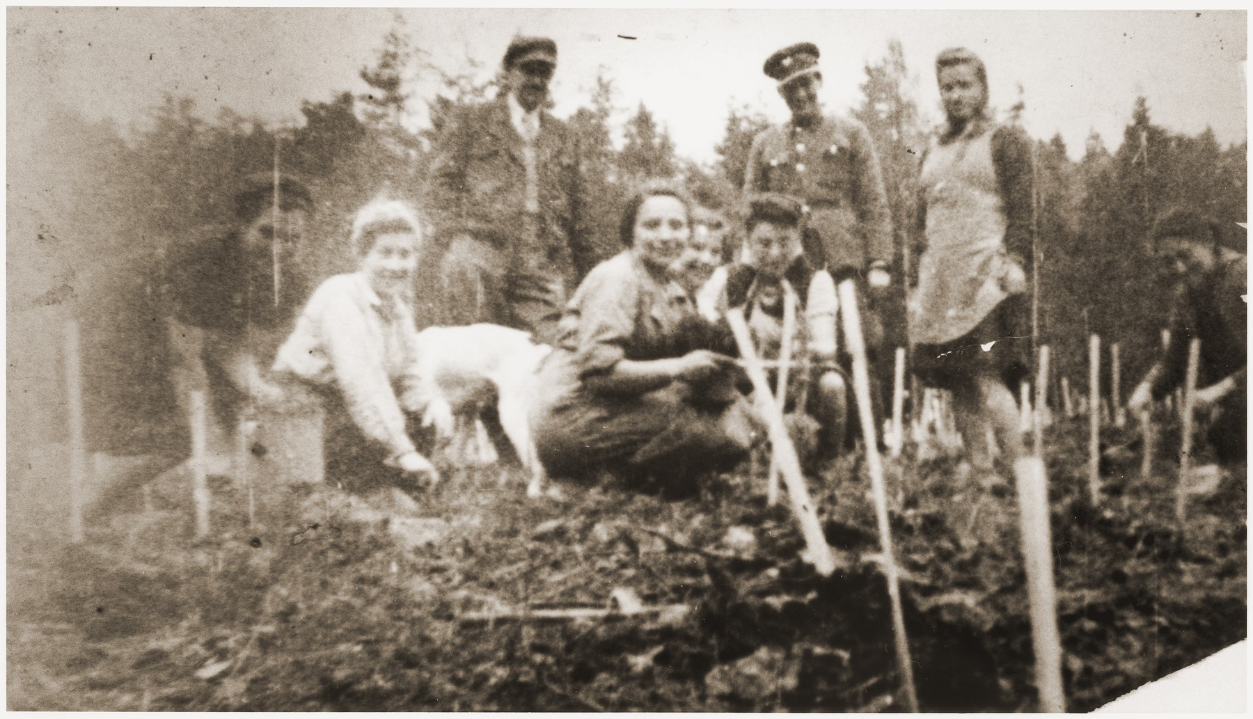 Jews from Wisnicz Nowy plant trees in Kopaliny supervised by a Polish soldier.    Among those pictured is Sala Schoen (front, left).