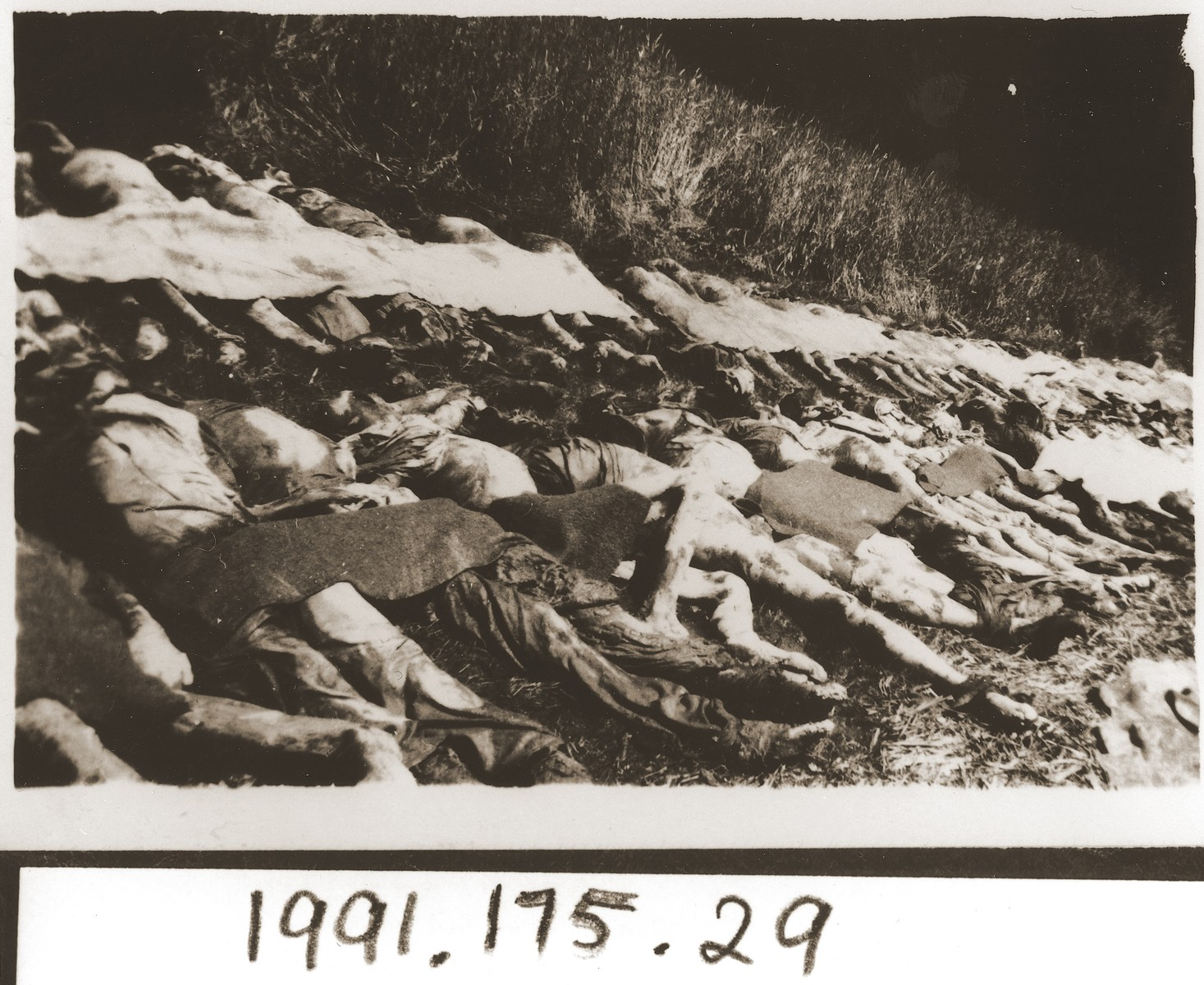 Rows of bodies exhumed from a mass grave in the vicinity of Nammering.