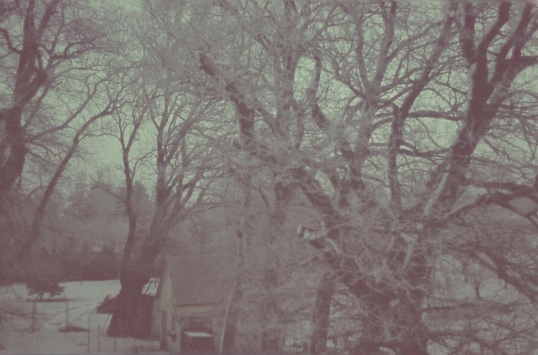 View of a winter landscape taken by Walter Genewein.