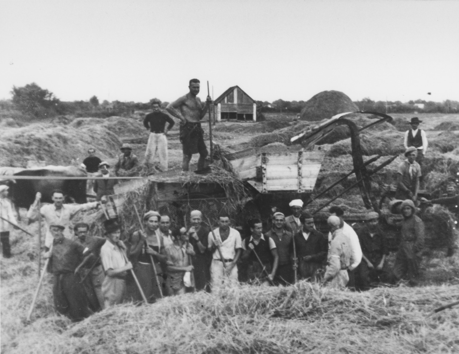 Group portrait of Jewish prisoners mowing hay in the Sabac concentration camp.  Among those pictured is Walter Fink.