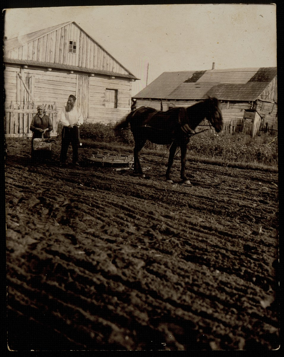 """Reb Dovid """"der Kichier"""" Moszczenik and his wife Leah, lead a horse-drawn plow in  their garden in back of their home.   Reb Dovid died a natural death; Leah was murdered by the Germans during the September 1941 mass shooting action in Eisiskes."""