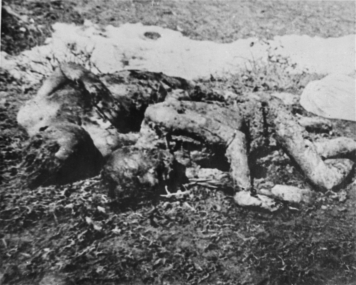 The bodies of prisoners executed by the Ustasa in Jasenovac.