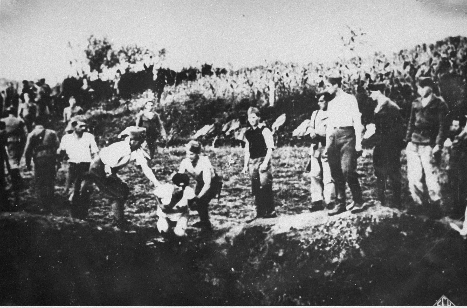 Ustasa militia execute prisoners near the Jasenovac concentration camp.