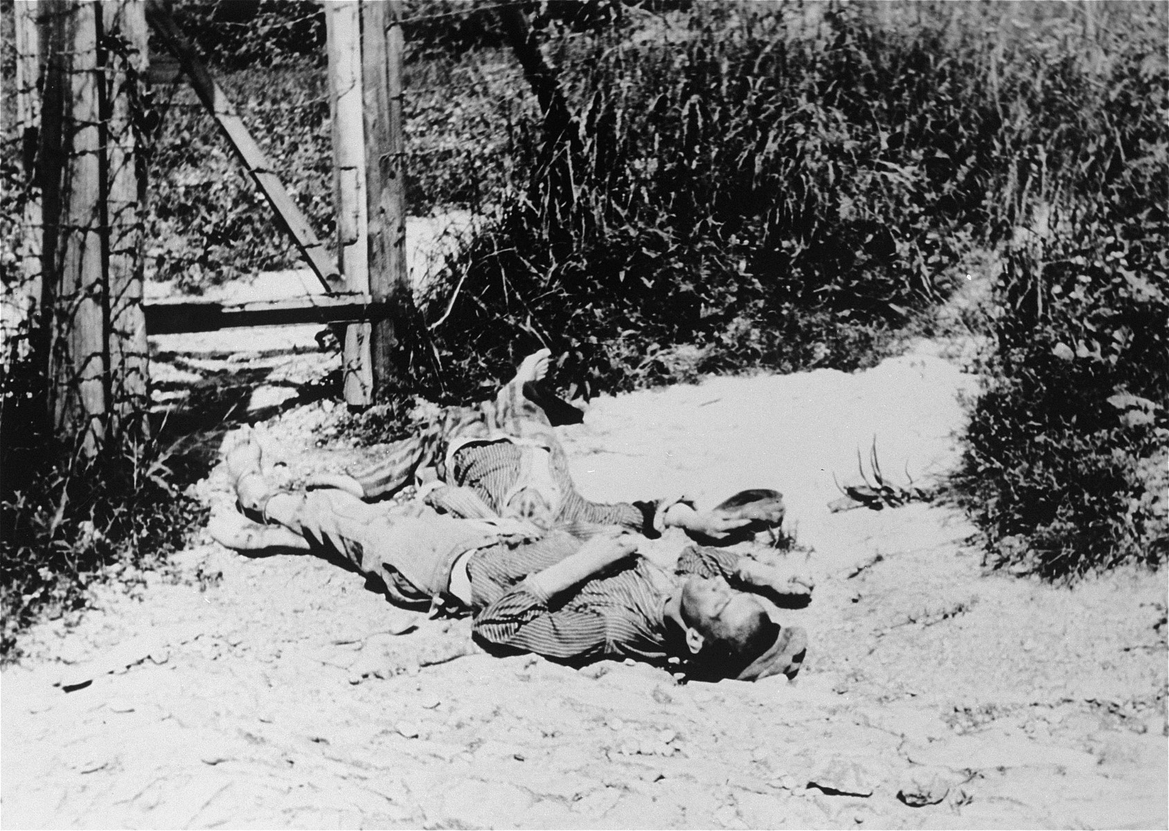 "The corpses of prisoners shot on the path to the ""Viennese Ditch""."