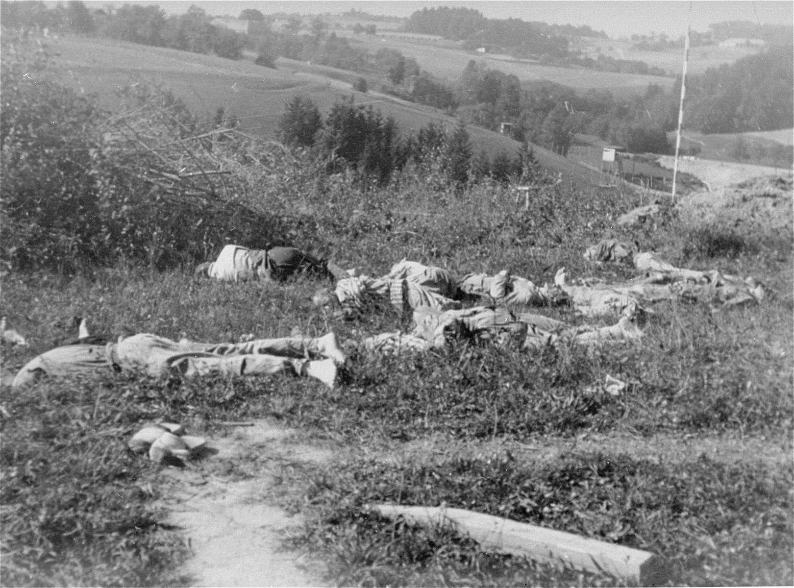 The corpses of fourteen Czech intellectuals shot by the SS in Mauthausen.