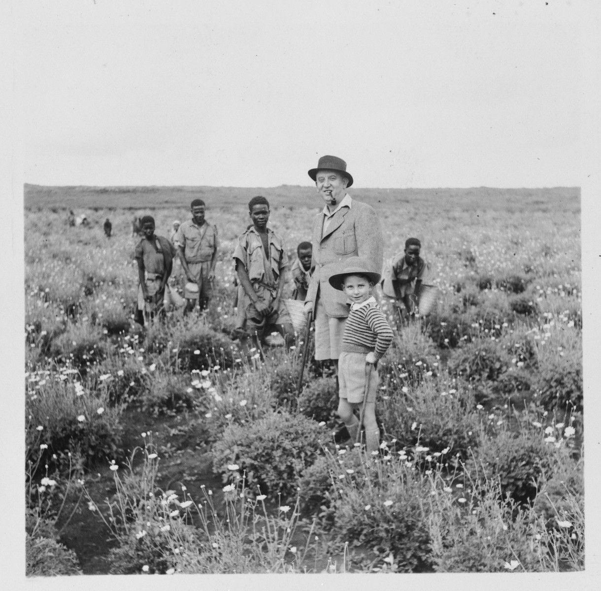 A Jewish refugee farmer inspects the pyrethrum fields where his African farmhands are working.  Pictured are Ernest Berg and his son Philip, who found refuge in Kenya during World War II.