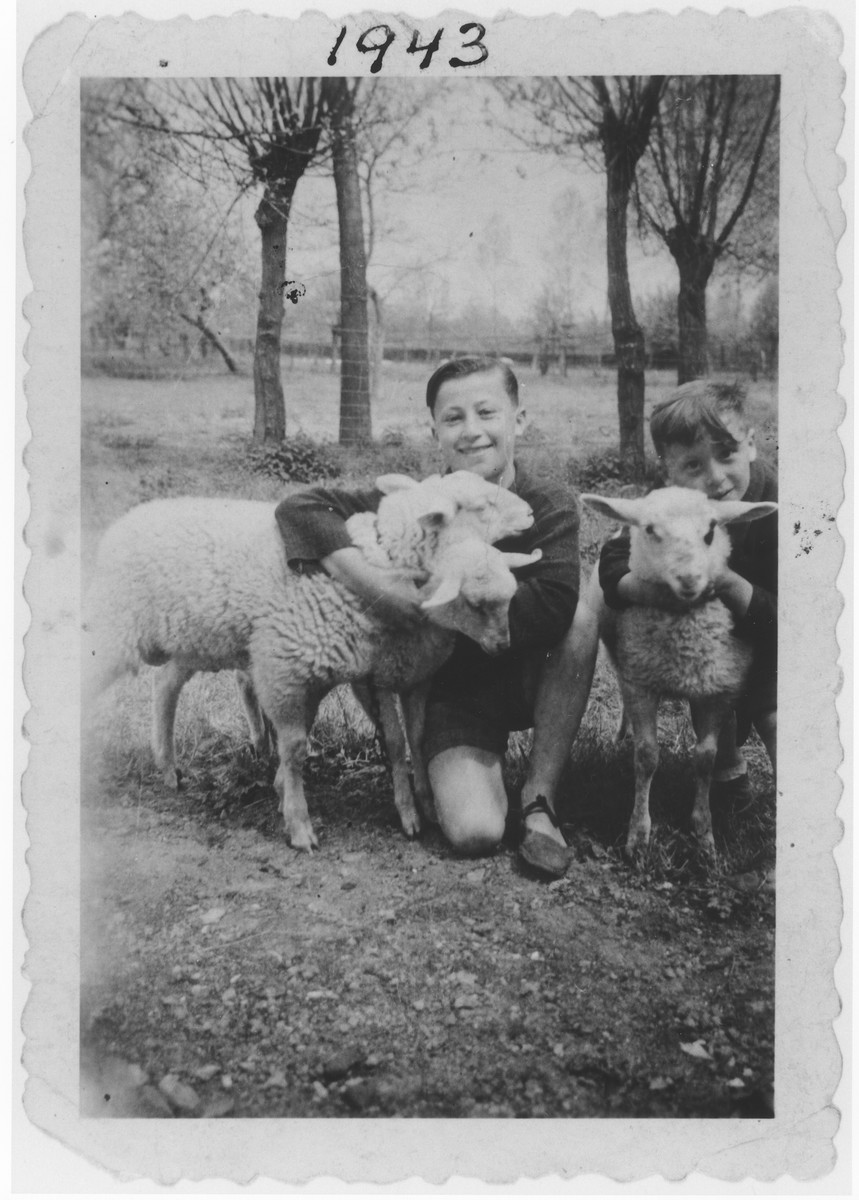 Isaac and Bernard Lajbman cuddle two sheep in the village Tourinnes-St. Lambert where they are living in hiding.