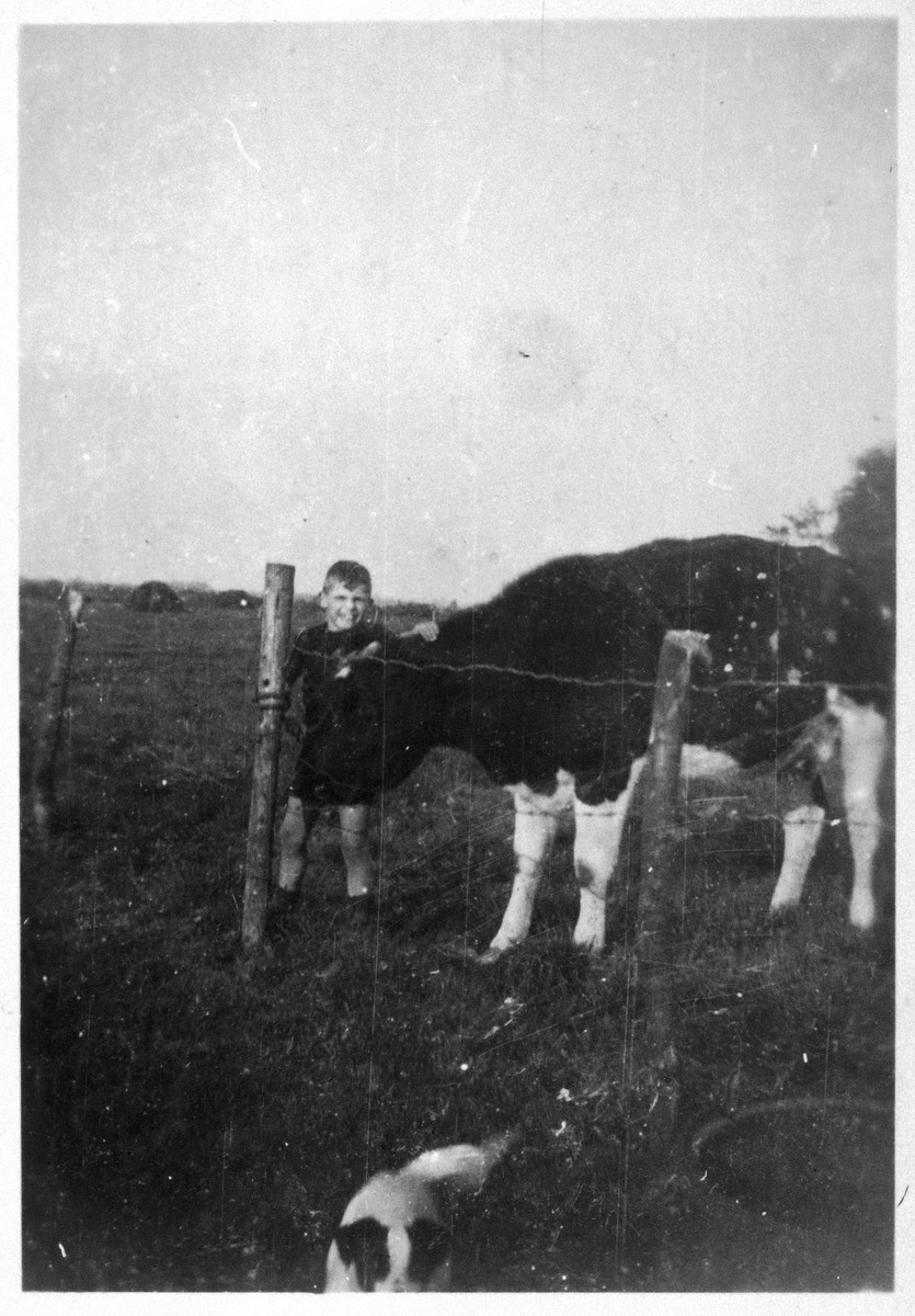 Peter Metzelaar stands next to a cow while hiding on a farm in the Netherlands.