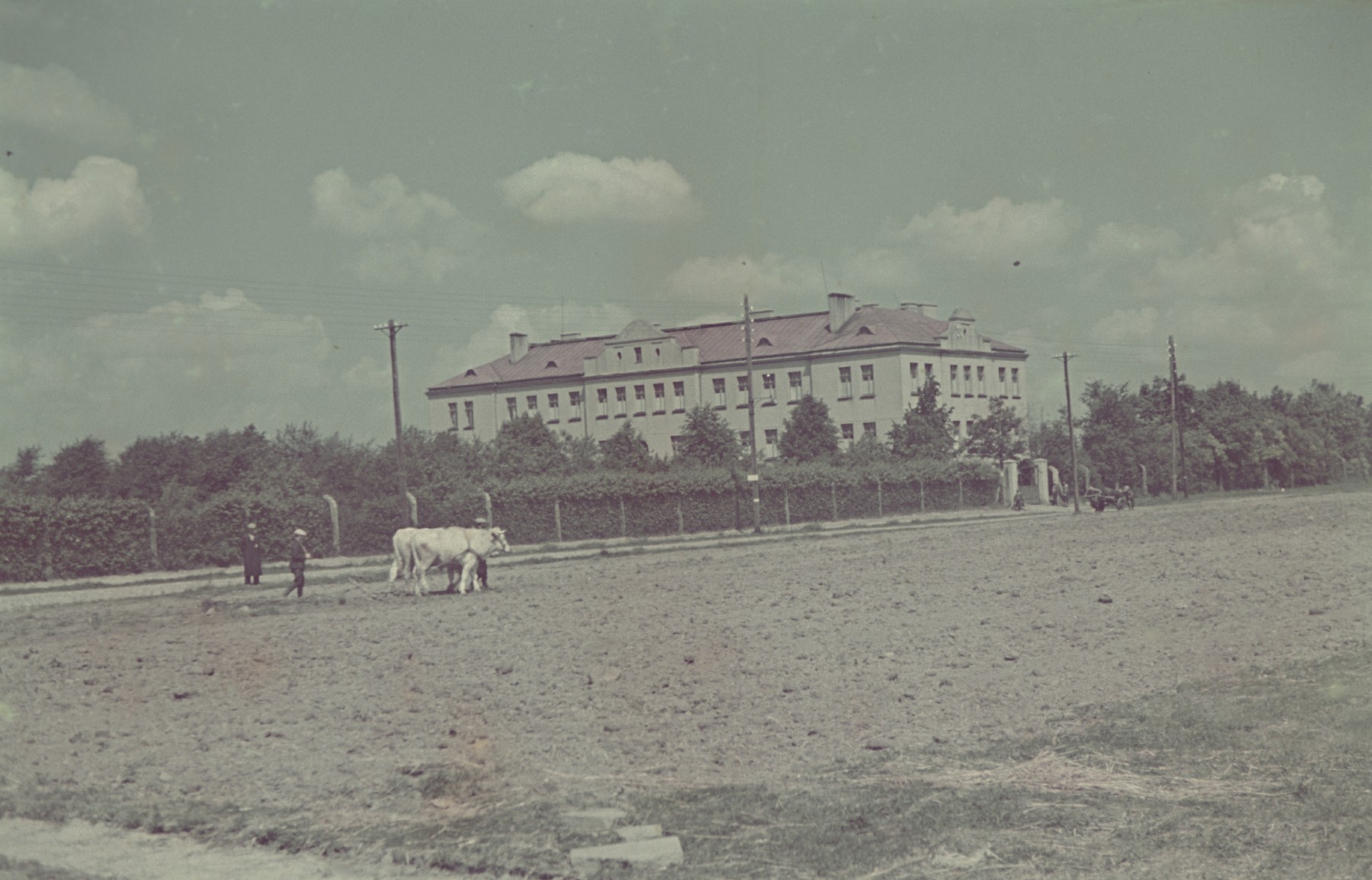 "A cow grazes in a field in or near the Lodz ghetto.  Original German caption is ""Litzmannstadt-Getto, Sattlerei"" (saddlery) but also written on the slide in English are the words, ""SS House""."