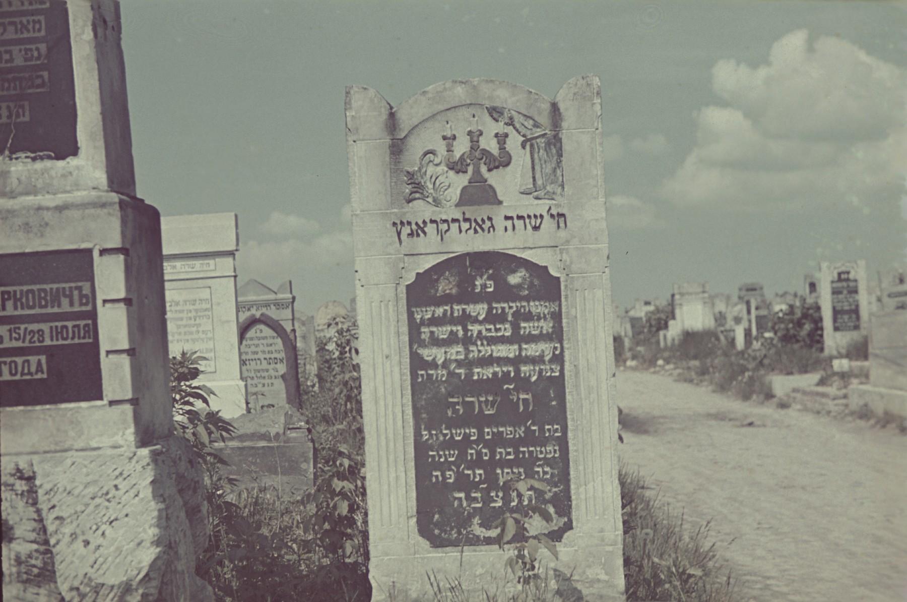 A woman walks down a path in the Lodz ghetto cemetery.