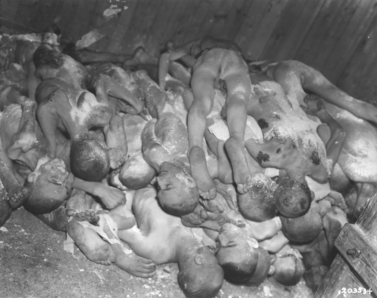 "A pile of naked bodies stacked in a shed in the Ohrdruf concentration camp.  The original caption reads ""Bodies of victims of Nazi brutality are piled in a shed at a prison camp.  Too ill to be moved, they were murdered when the U.S. Third Army advance made German retreat necessary.""  The original Signal Corps caption reads, ""SS MURDER CAMP UNCOVERED.  The swift advance of the Third U.S. Army's famous Fourth Armored Division uncovered the horror of a Nazi SS murder camp at Ohrdruf, entered April 4, 1945, after the fall of Gotha, eight miles to the north.  American soldiers who seized the camp found the courtyard littered with the bodies of Czechoslovakian, Russian, Belgian and French slave laboreres, slain because they were too weak to be evacuated.  In a shed, they found a stack of 44 naked and lime-covered bodies.  According to survivors, 3,000 to 4,000 prisoners had been killed by SS troops, 70 being slain just before the Americans reached the camp.  The 80 survivors had escaped death or removal by hiding in the woods.  They reported that an average of 150 died daily, mainly from shooting or clubbing.  The Nazi system was  to feed prisoners a crust of bread a day, work them on tunneling until they were too weak to continue, then exterminate them and replace them with another 150 prisoners daily.  Led by Colonel Hayden Sears of the Fourth Armored Division, prominent German citizens of the town of Ohrdruf saw with their own eyes the horrors of SS brutality during a conducted tour of the Ohrdruf charnelhouse April 8, 1945.  As they stood over the slain prisoners, Colonel Sears said:  ""This is why Americans cannot be your friends...""  The enforced tour of the Germans ended with a visit to a wood where 10 bodies lay on a  grill, made of railways lines, ready for cremation.  Colonel Sears asked a uniformed German medical officer:  ""Does this meet with your conception of the German master race?""  The officer faltered and at last answered:  I cannot believe that Germans did this.""  """