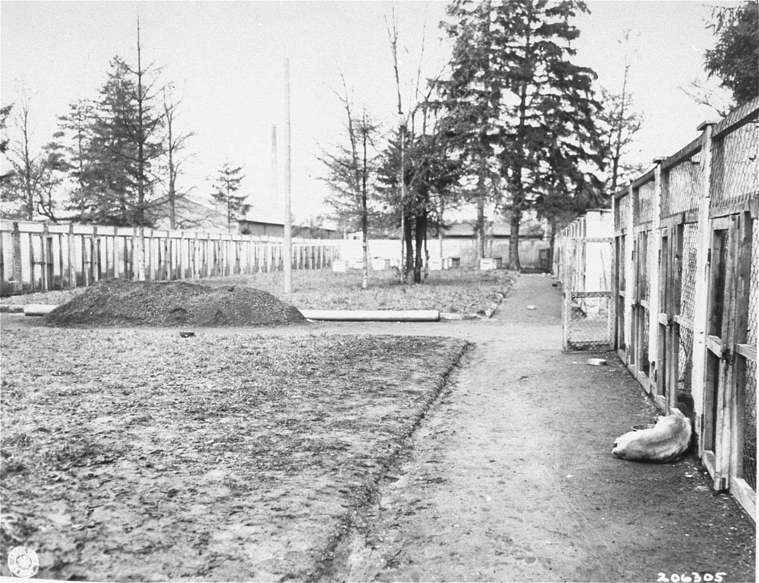A dead dog lies where it was shot in front of the SS kennels.  The SS used dogs to guard the perimeter of the camp.
