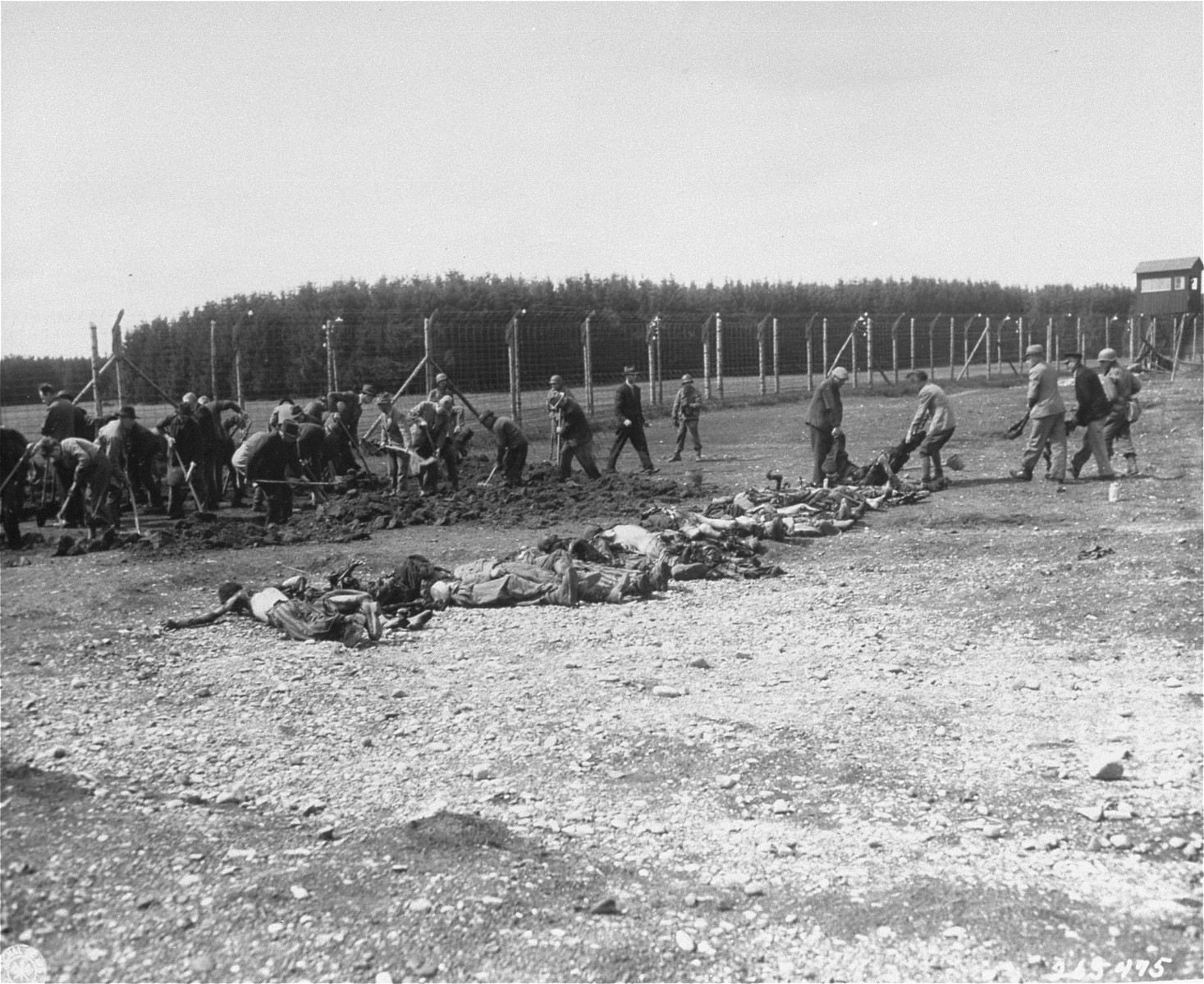"German civilians conscripted by U.S. troops from the surrounding area dig graves for the dead found in the Kaufering IV concentration camp.  Original caption reads, ""German civilians from the Landsberg Germany, are digging graves of the  Stalag #4 concentration camp for political prisoners, Russians, Poles French and Jewish, starved and Burned to death by German S.S. troops, about 400 bodies were found."""