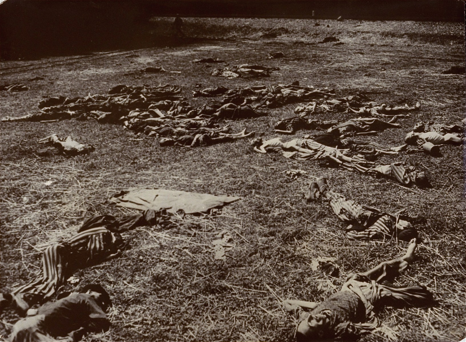 Corpses litter a field near the rail spur that served the Kaufering IV concentration camp.