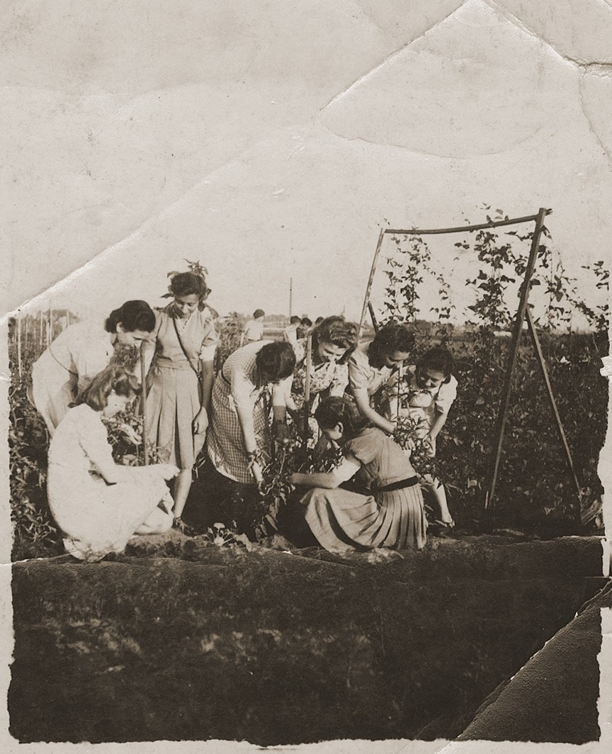 "A group of young Jewish women, members of the Hanoar Hatzioni Zionist youth movement, picking vegetables on the ""Farma.""   Pictured from left to right are: Rosza Slabecka; Edzia Cudzynowska; Sala Garfunkel; Hadasa Cudzynowska; Lusia Szpira, Rutka Landau and Hindzia Chilewicz.  The ""Farma"" was a  plot of land between Bedzin and Sosnowiec that was allocated to the local Zionist youth movements by the Jewish Council for the growing of vegetables. The youth movements created a hachshara on the site.  Soon after, the ""Farma"" became the center of resistance efforts, as well as youth activity, in the ghetto."