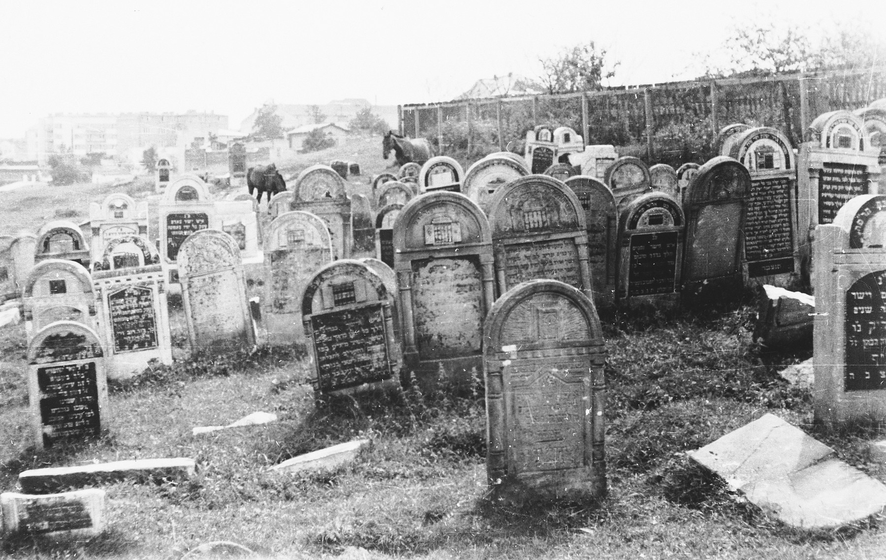 View of the Jewish cemetery in Lublin.