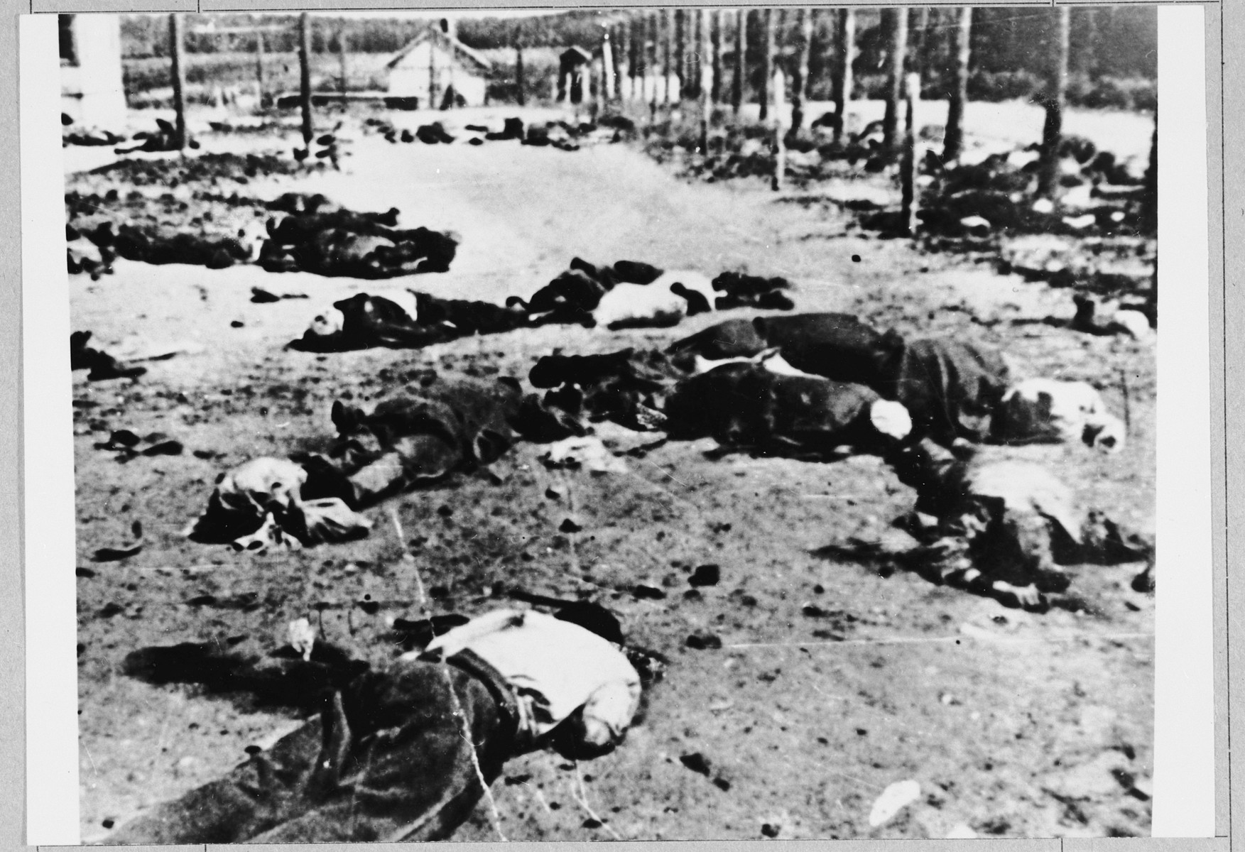 The bodies of prisoners who were killed immediately upon their arrival to the Jasenovac concentration camp.