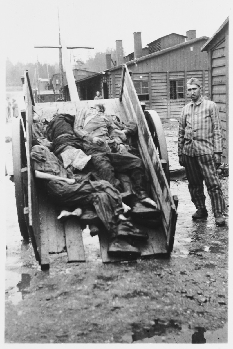 A survivor stands next to a cart filled with corpses in the Hurlach concentration camp.