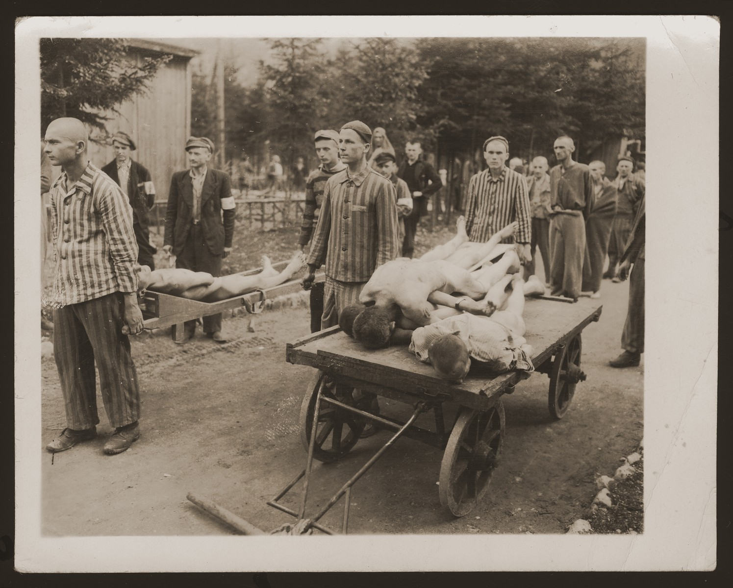 Using stretchers and carts, survivors of the Ebensee concentration camp remove the bodies of former inmates to the crematorium for burning.   Among those pictured is Henek (now Hank) Brodt (center, wearing a black cap and white arm band, behind a survivor carrying a stretcher).