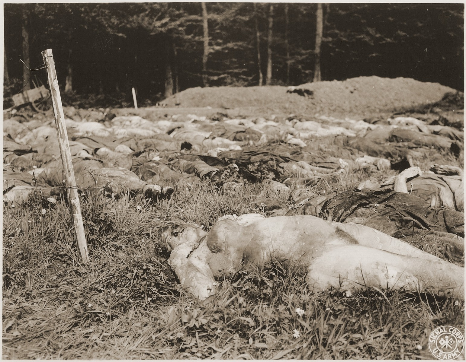 "The corpses of female prisoners exhumed from a mass grave near Hirzenhain lie out in a field.  The original caption reads, ""Jewish women died from burtality and malnutrition lying in the field awaiting to be buried by the civilians at the Hergenhein concetration camp, Germany."" [sic]  According to the Signal Corps caption, the photo was taken on May 6, 1945."