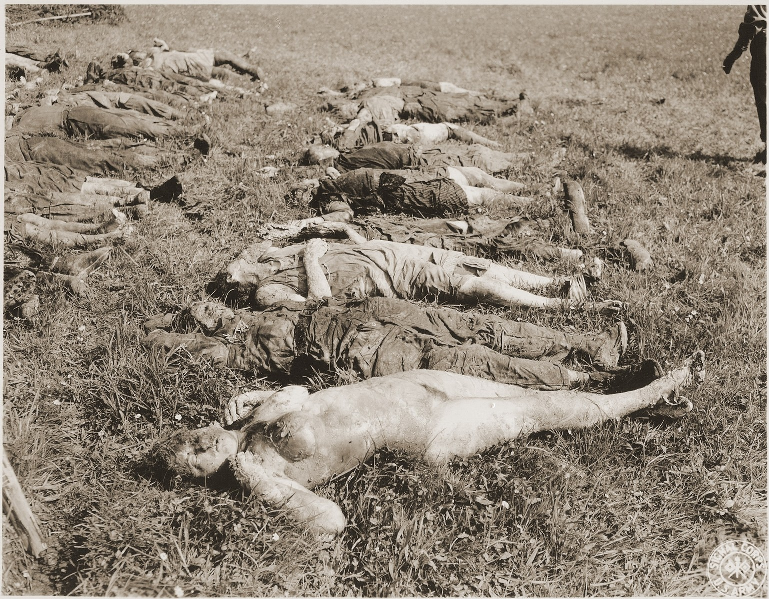 "The corpses of female prisoners exhumed from a mass grave near Hirzenhain lie out in a field.   Original caption reads, ""Jewish women died from burtality and malnutrition lying in the field awaiting to be burried by the civilians at the Hergenhein concentration camp, Germany.""   According to the Signal Corps caption, the photo was taken on May 6, 1945."