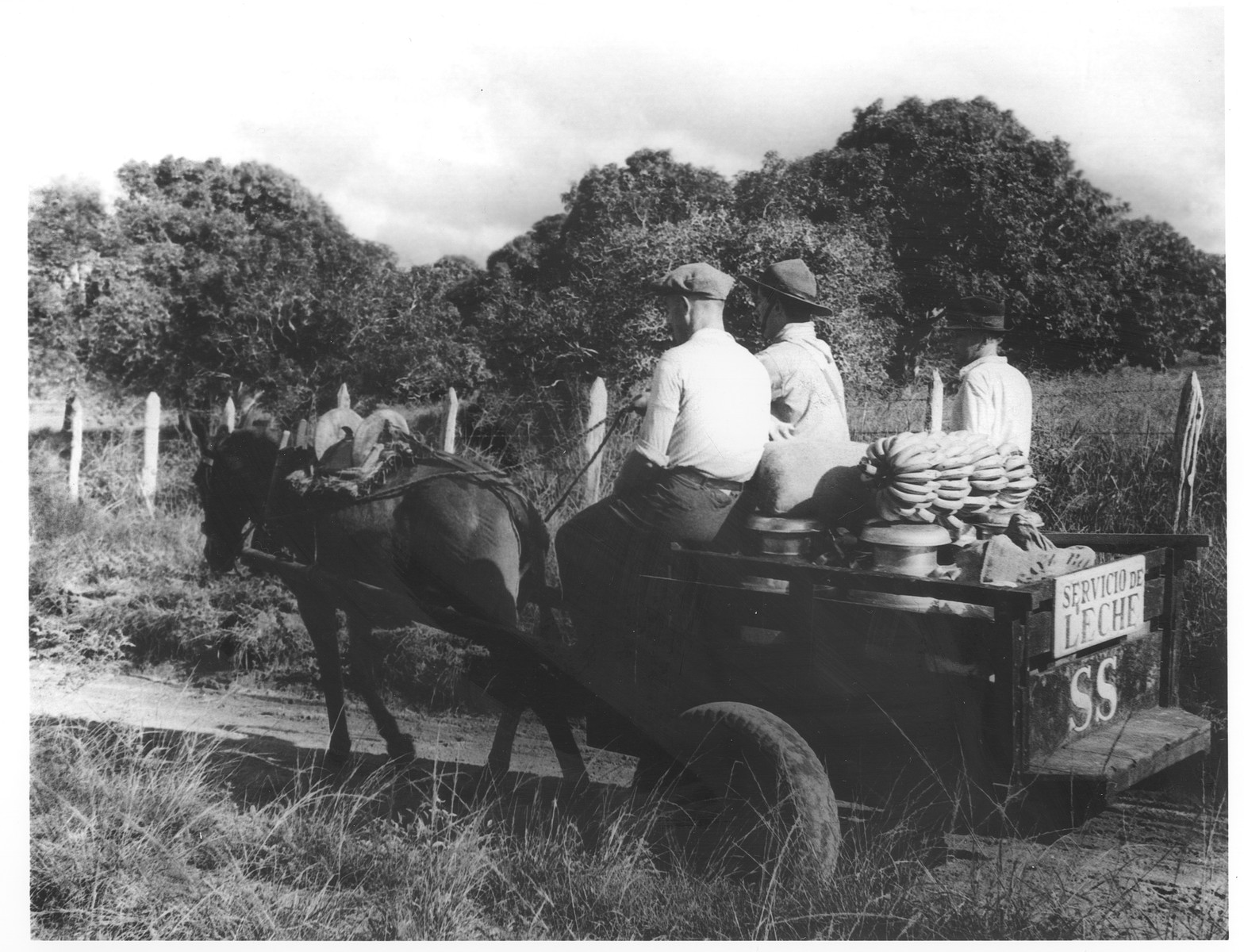 Jewish refugees living in the Sosua refugee colony deliver milk and bananas in a horse-drawn wagon.  Seated in the center is Freddy Adler.