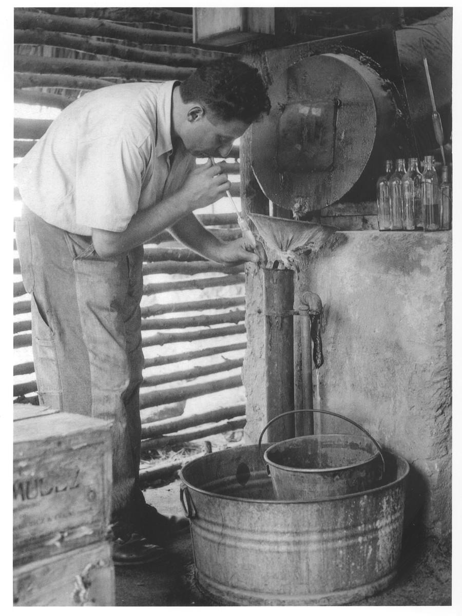 A Jewish refugee in Sosua works in a distillery.  Pictured is Ernest Schreiner.