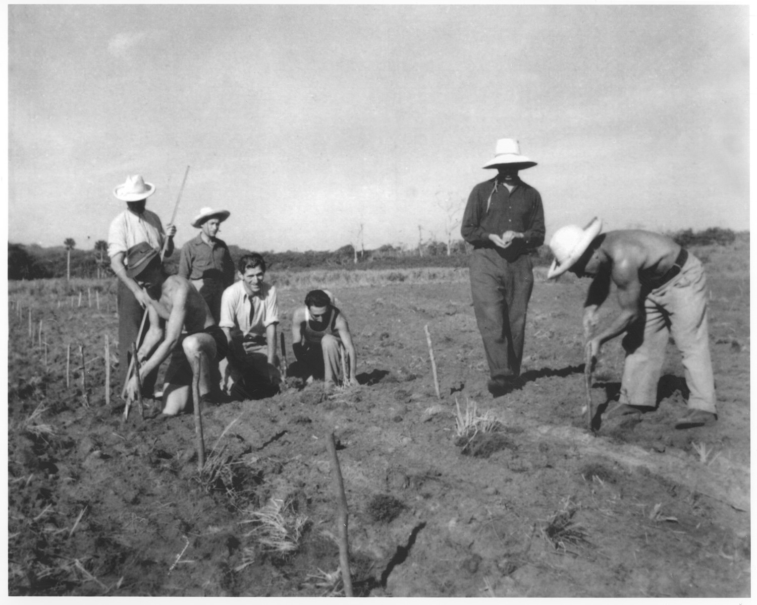 Jewish refugees work in the fields in Sosua.