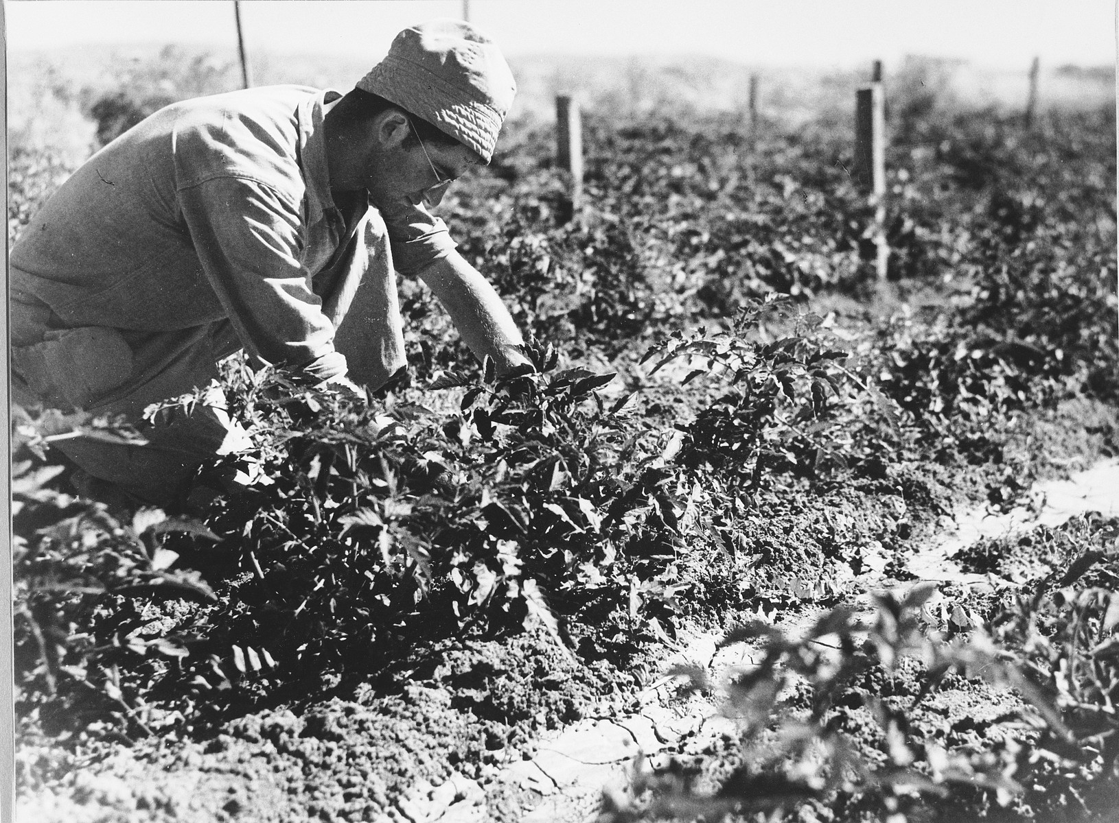 A man inspects a new crop in Tel Shachar.