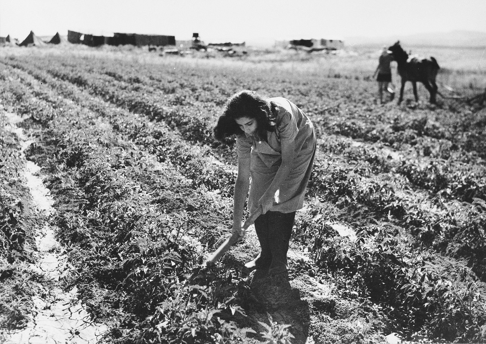 A young woman hoes a field in Tal Shachar.