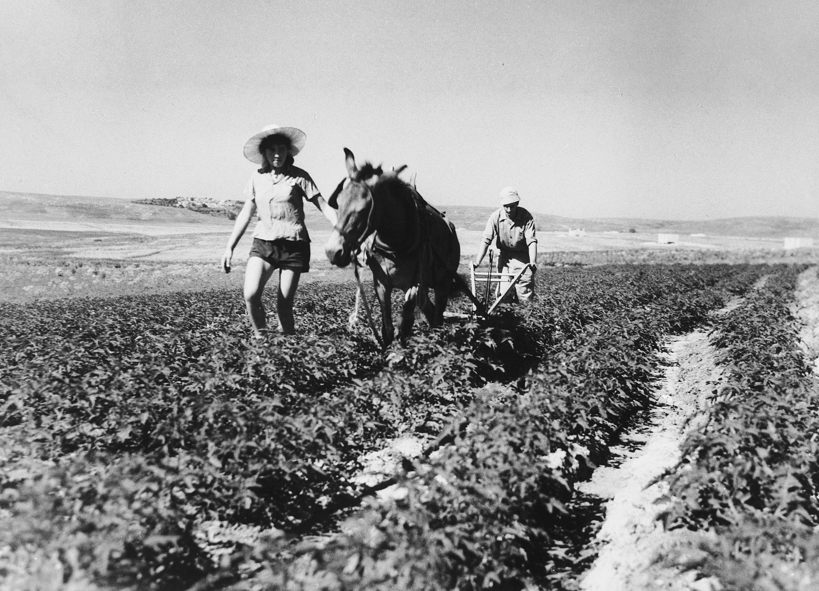 Two new immigrants plow a field in Tal Shachar.