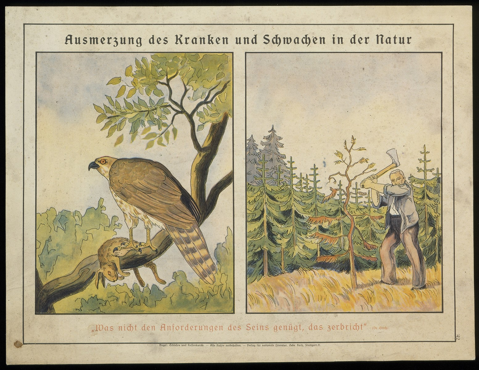 "An illustration, probably from a children's book, entitled ""Ausmerzung des Kranken und Schwachen in der Natur"" [Eradication of the sick and weak in nature].  The caption below the illustrations reads, ""That which does not satisfy the demands of existence will be crushed."""