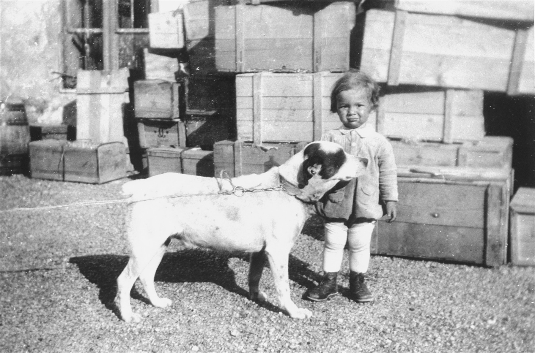 Portrait of the donor's son, Heinrich Muller, with a dog in the courtyard behind their home and business in Hlohovec, Czechoslovakia.