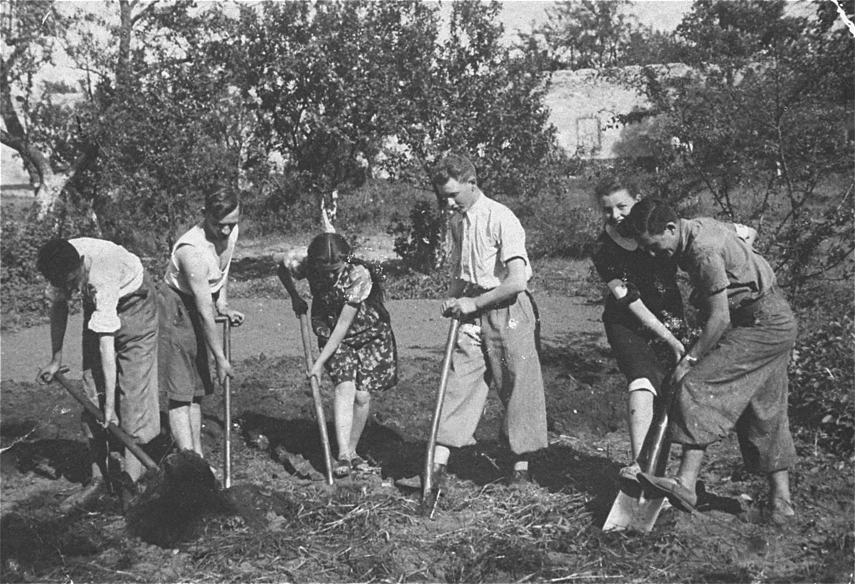 Members of the Hashomer Hatzair Zionist collective prepare the ground for planting on the farm in Zarki.  Among those pictured are: Heniek Pejsak (second from the left); Mania Kalpkop (third from the left); Lejzor Zborowski (third from the right); and Berek Lemel (first on the right).