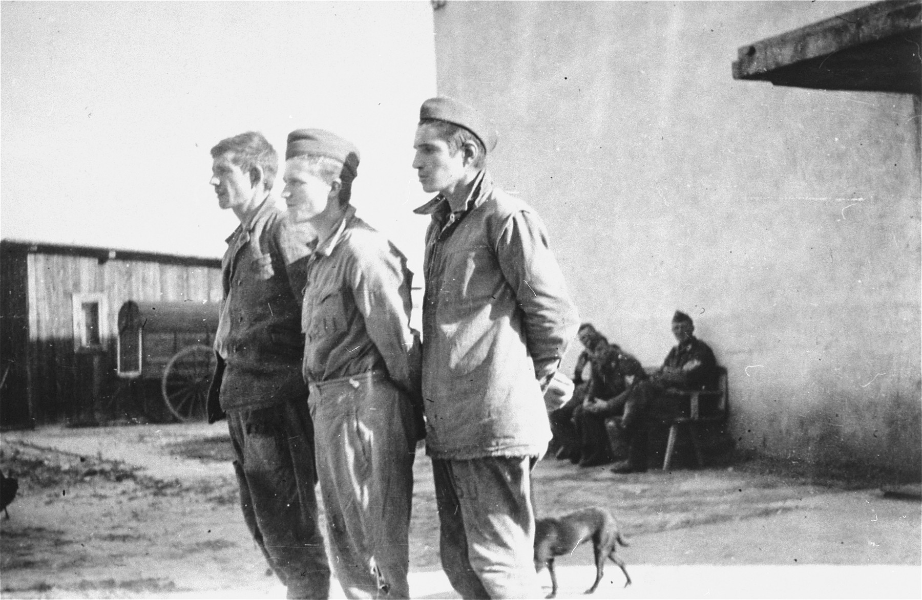 Three Soviet POWs who were captured near Wisznice, stand with their hands tied behind their back.  They were later executed in the Lyniewski Forest.