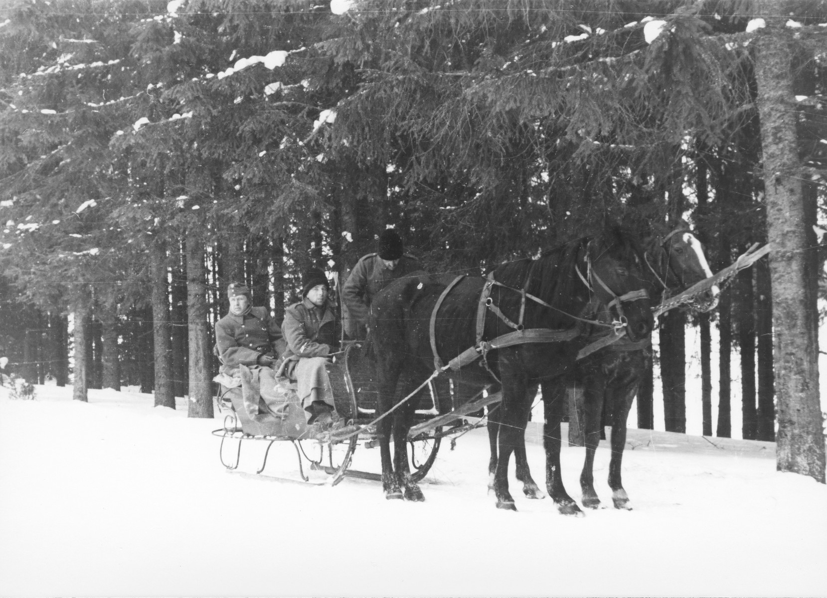 The Hungarian commanders of Company 108/57 in a horse-drawn sleigh.