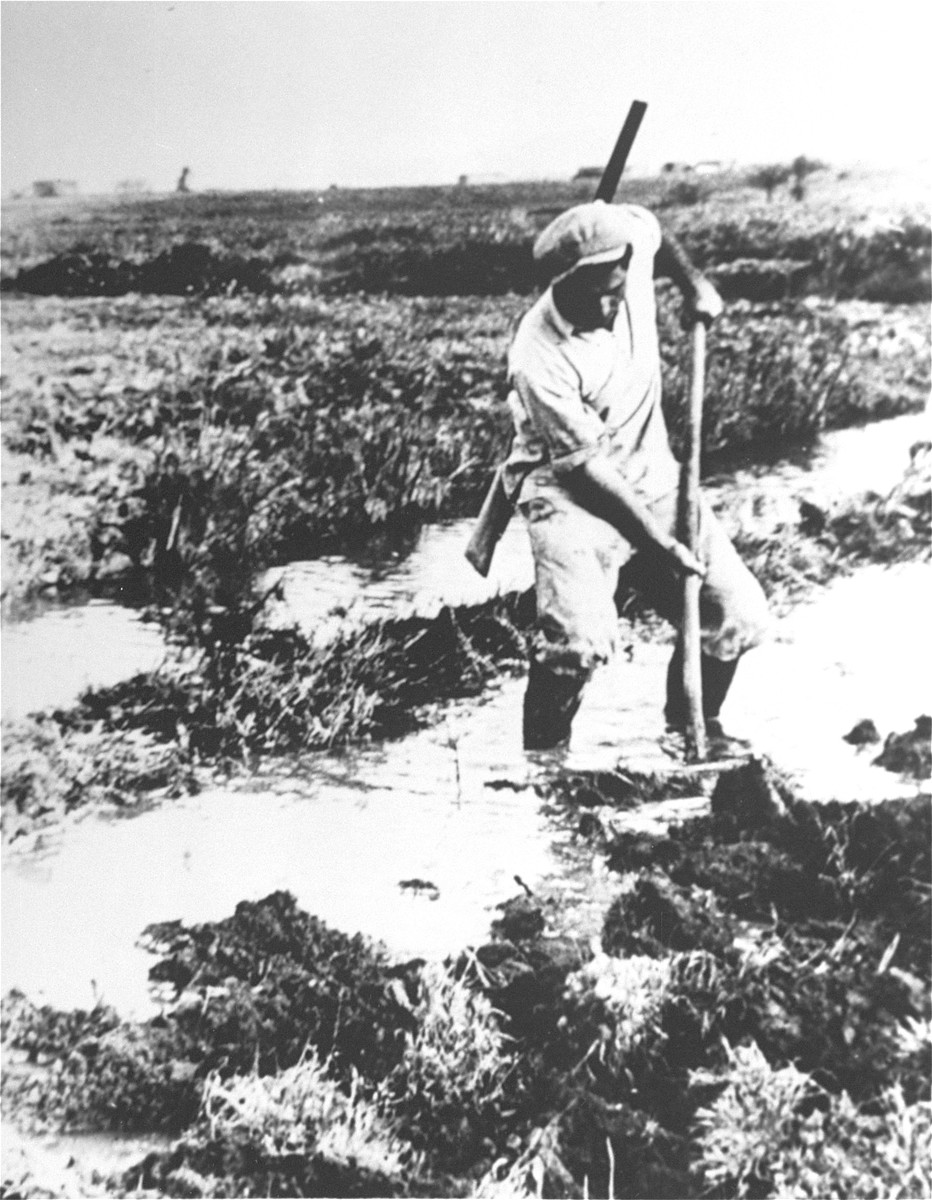 A Jewish laborer at work draining swamp land in northern Palestine.