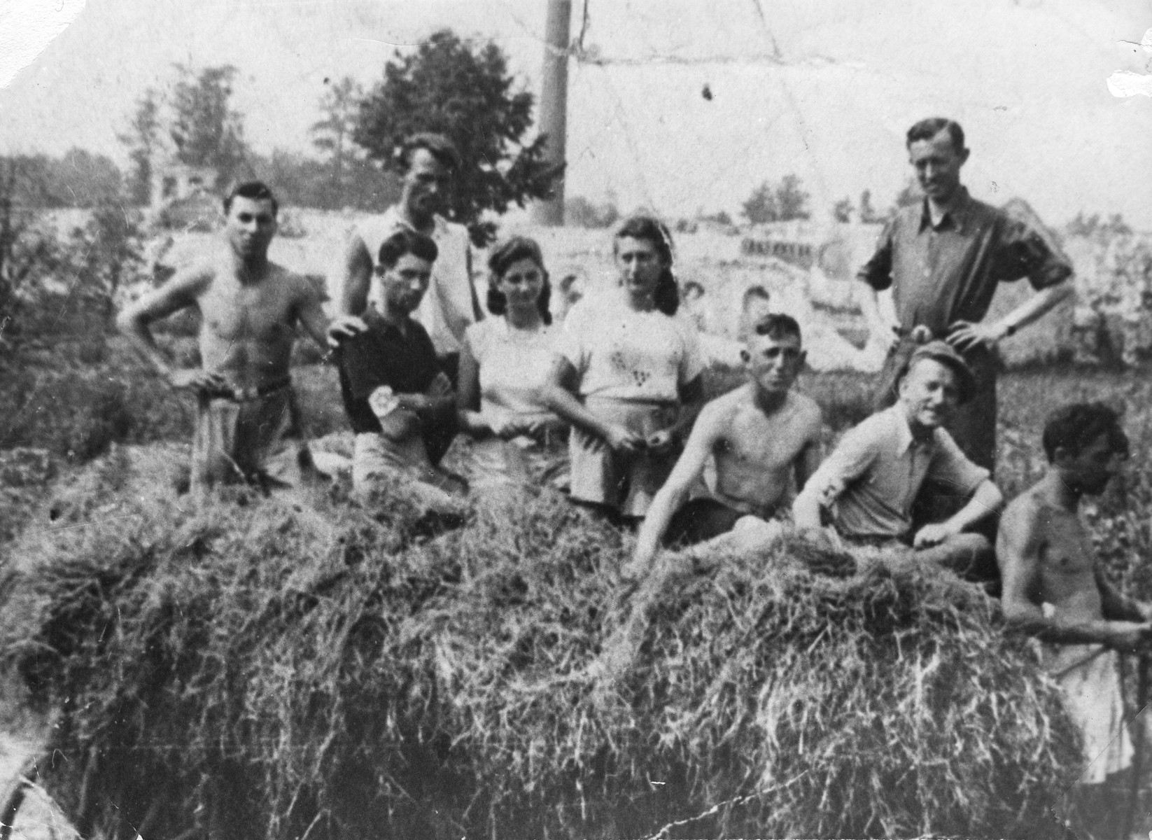 Members of the Hashomer Hatzair Zionist collective in Zarki ride on a hay wagon on their farm.    Pictured from left to right are Motek Weinrib, Srulek Warszawski, unidentified, Lodzia Hamersztajn, Chagit Elster, Lejzor Zborowski, unidentified, Arie Wilner and Avram Zilbersztajn.  The photo was taken during the visit of Arie Wilner.