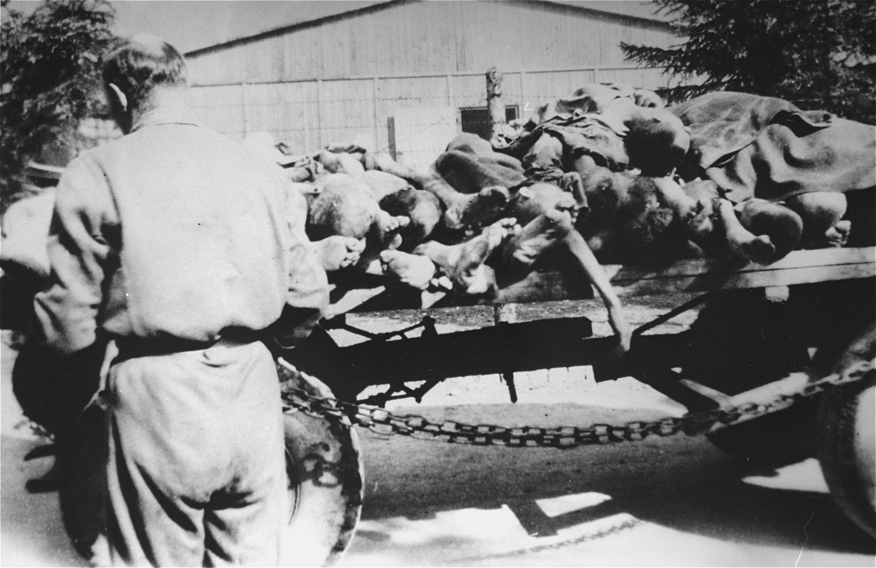 The bodies of concentration camp prisoners are stacked on a wagon in Ebensee.