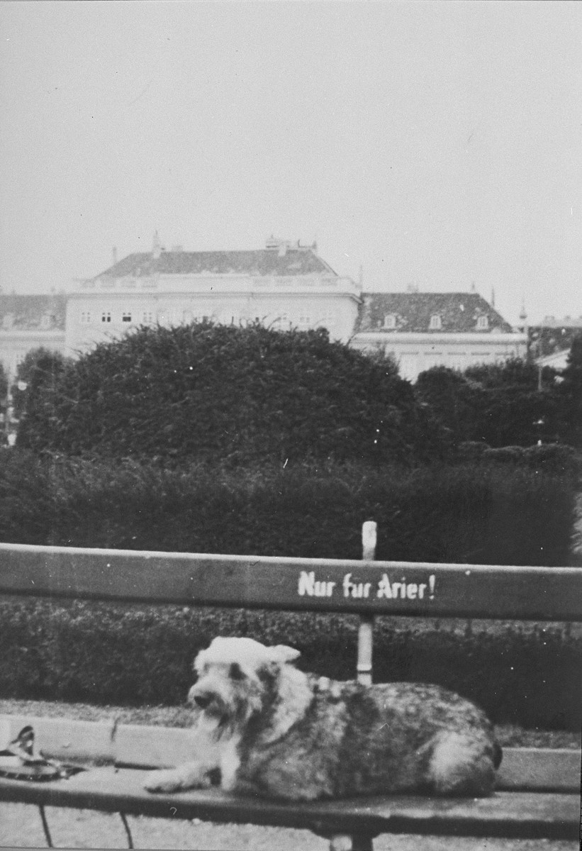 """A dog lies on a park bench which is marked """"Nur fuer Arier!"""" [Only for Aryans]"""
