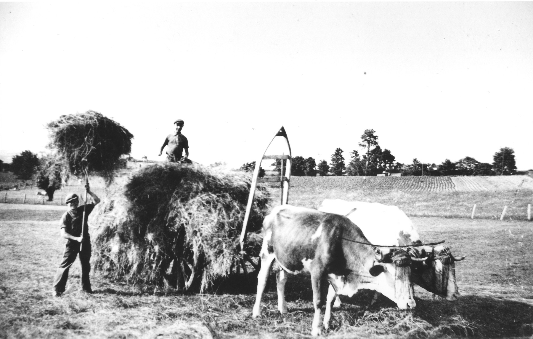 A hidden Jewish youth works on a hay wagon at a farm near Lyon, France.    Pictured is the donor's brother, Herbert Karliner.