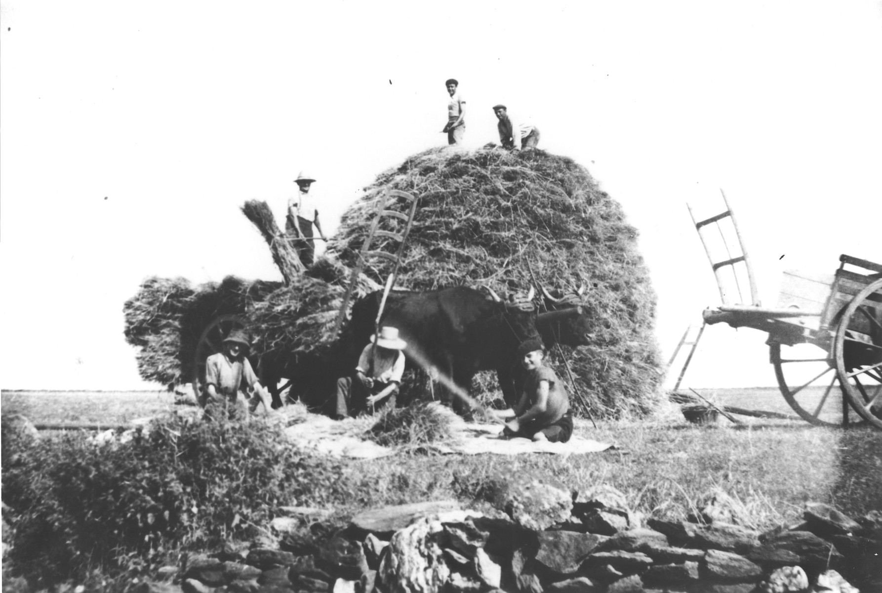 Young agricultural workers pitch hay onto a large haystack on a farm in Treves.    Among those pictured is Julien Bluschtein, a Jewish youth in hiding.