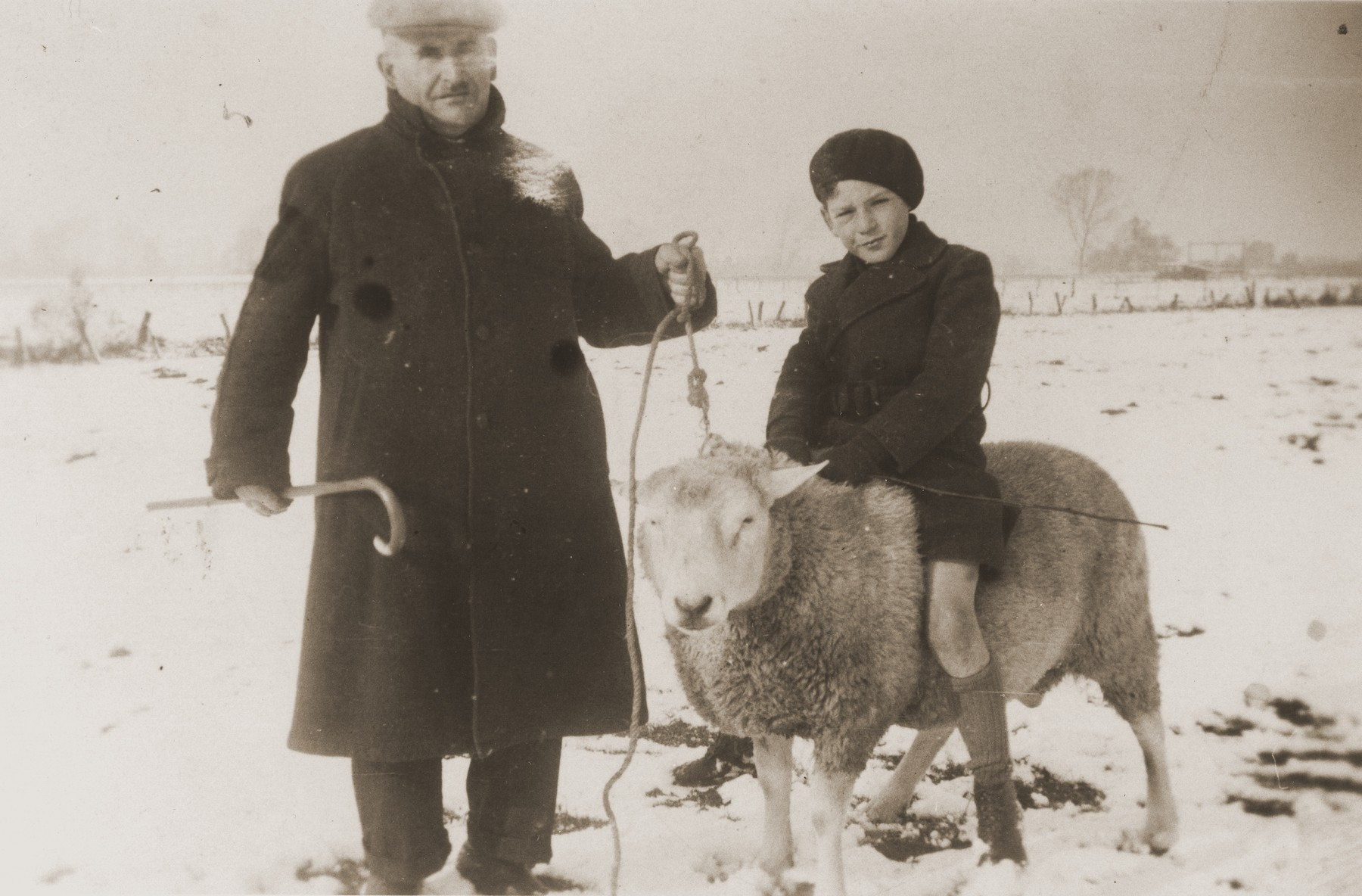 Lehman van Gelder takes his nine-year-old grand nephew, Sallo Menco, for a ride on a sheep.  Sallo, the son of Leo and Fie Menco, was deported and killed with his father during the war after their hideout in the woods outside Eibergen was raided by German police.  Sallo's mother and sister, Bep, survived, as did his great uncle Lehman van Gelder.