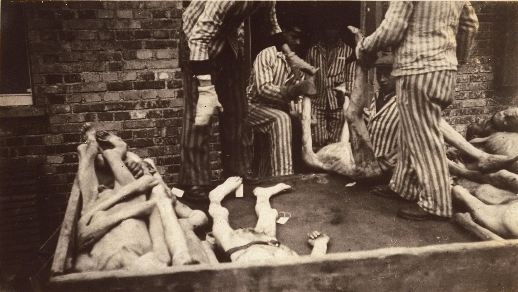 Survivors in Dachau remove bodies from the cellar of the crematorium.