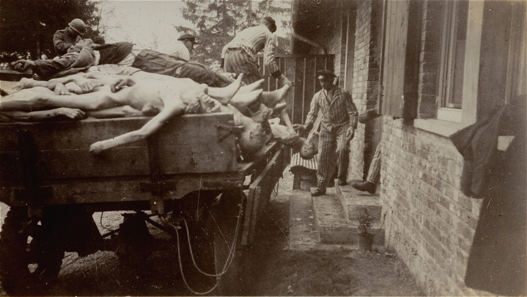 Survivors in Dachau remove bodies from the cellar of the crematorium.