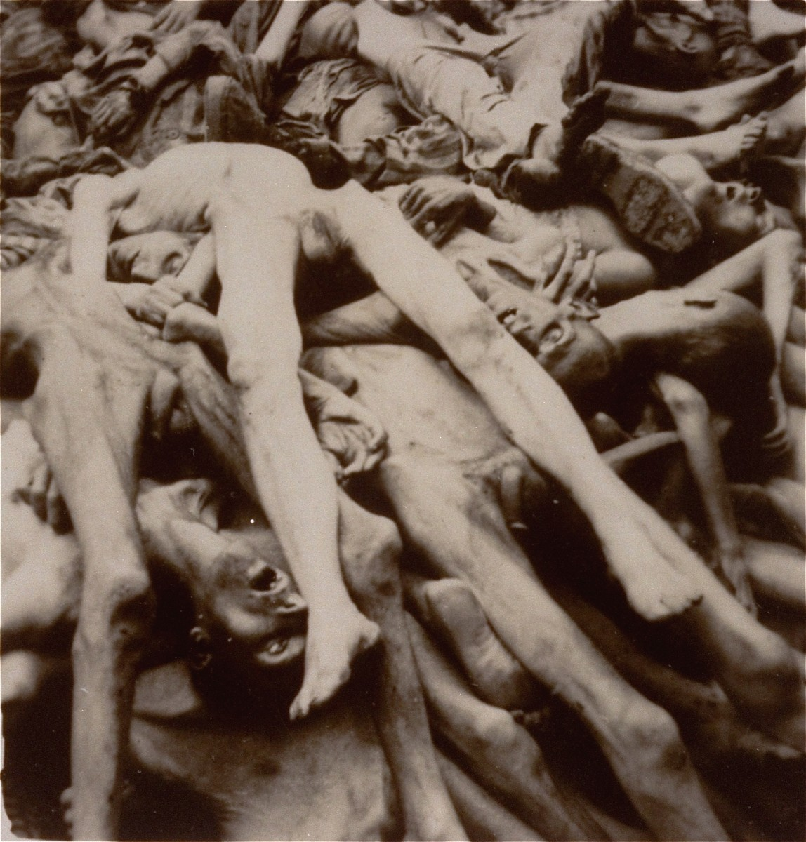 A pile of corpses in the newly liberated Dachau concentration camp.
