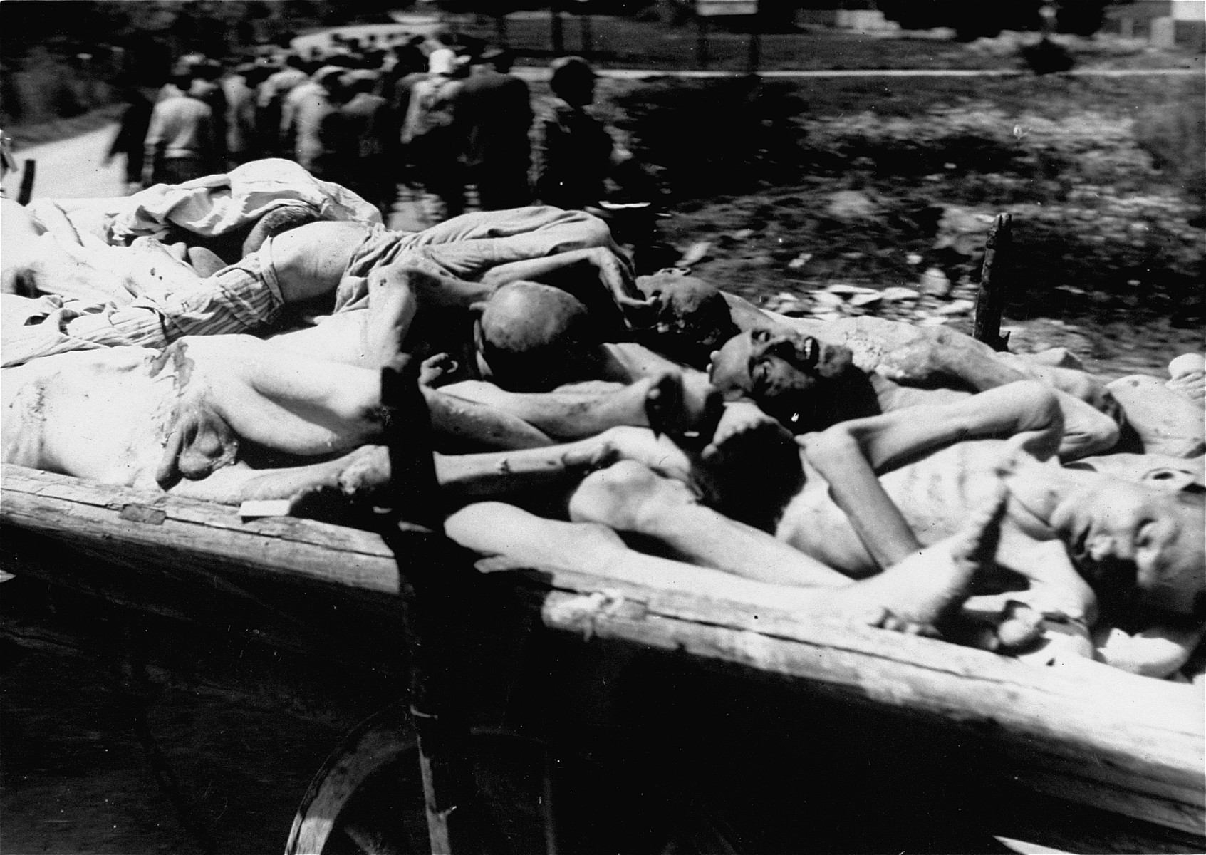 Corpses from the Dachau concentration camp on route to burial in a cart levied from local farmers.  Allied authorities required local farmers to drive their loaded carts through the town of Dachau as an education for the inhabitants.