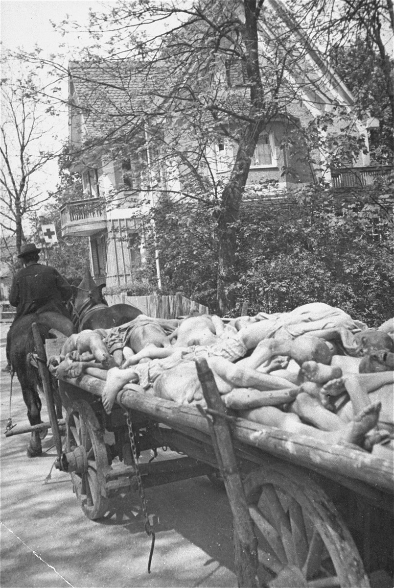 A German civilian transports corpses from the Dachau concentration camp to a nearby site for burial in a mass grave.
